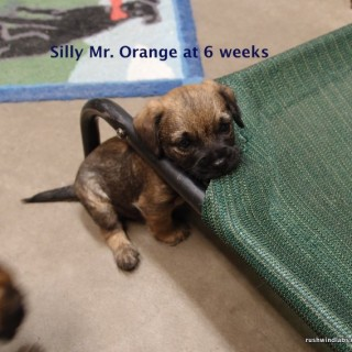 Little Mr. Orange