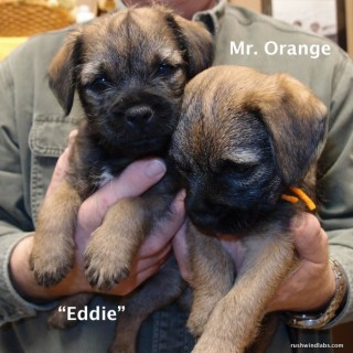 Eddie and Mr. Orange