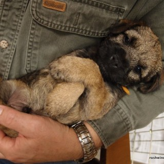8 week old BT