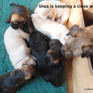 Mama Shea is keeping a very close eye on her babies!
