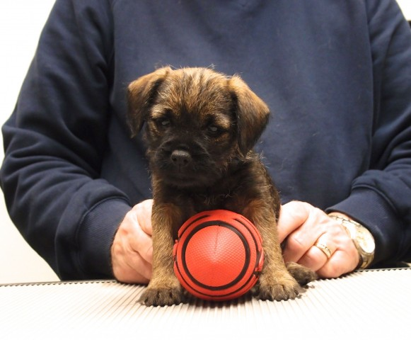 """Trixie"" at 7 weeks old"