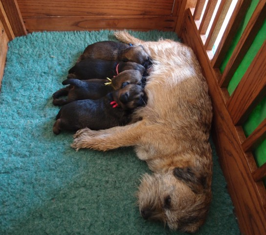 The Whole Gang with Mama Indy at 2.5 weeks
