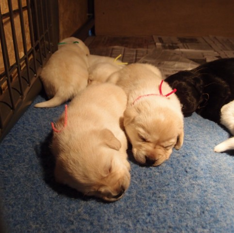 Pups are tired after their big move.