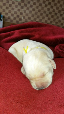 Miss Yellow at 1 week