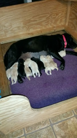 Navy tending to her week old babies