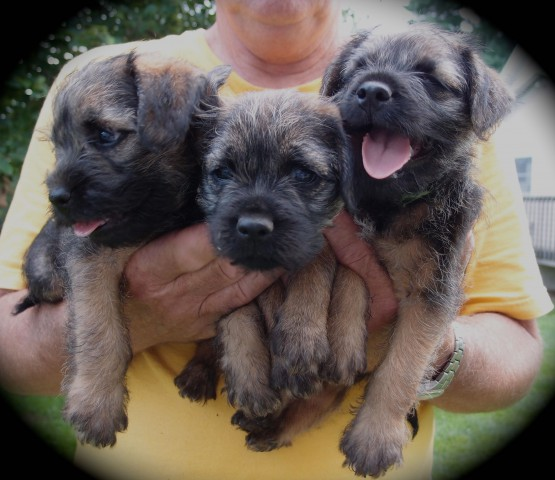 "7 weeks old today! From the left: ""Kal"", ""Gracie"", and ""Thomas"""